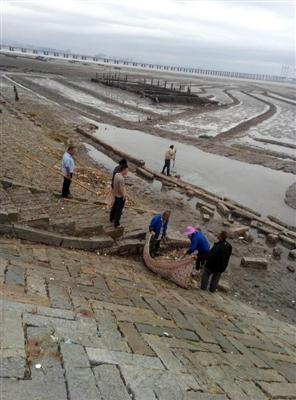 蚶江及时清理海漂垃圾