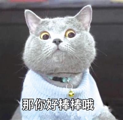 """""""每次和朋友聊天,都要用到猫咪表情包,觉得特别能表达我的心情,还有些"""