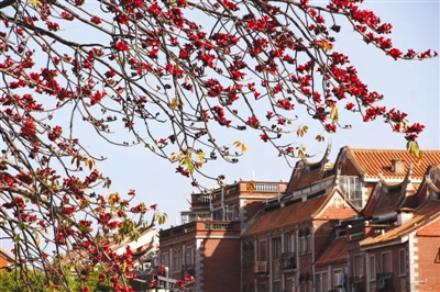 春天清明前后开花,满树黄花,如缀风铃;夏天长叶结豆荚,有金秋之喜
