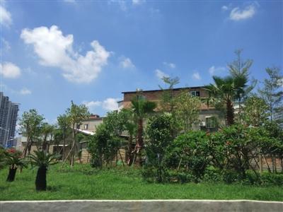 红花绿地公园风景图片